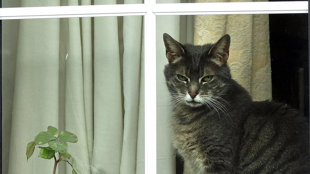 Katt är ett populärt husdjur världen över. Just den här katten hör hemma i London och har inte varit föremål för en vårdnadstvist.