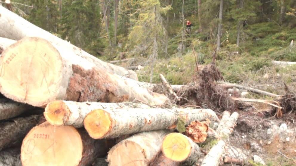 I Karelens urskog hämtar Ikea delar av det virke som behövs i möbeltillverkningen.