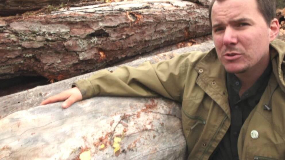 Viktor Säfve från organisationen Skydda skogen reagerar på Ikeas avverkningar i Karelen.