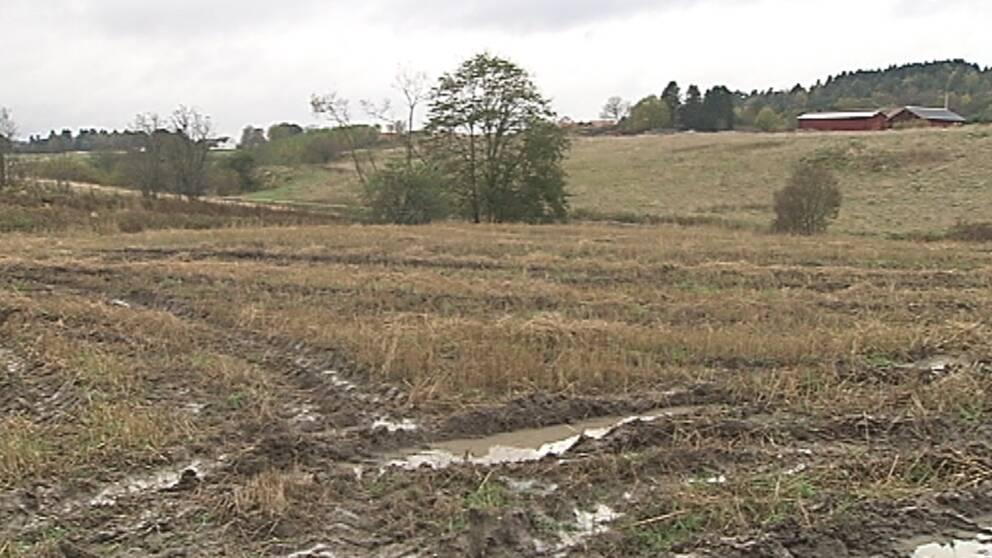 Mycket regn under lång tid resulterade i mycket blöta åkrar, som här i Ale i Västergötland den 15 oktober.