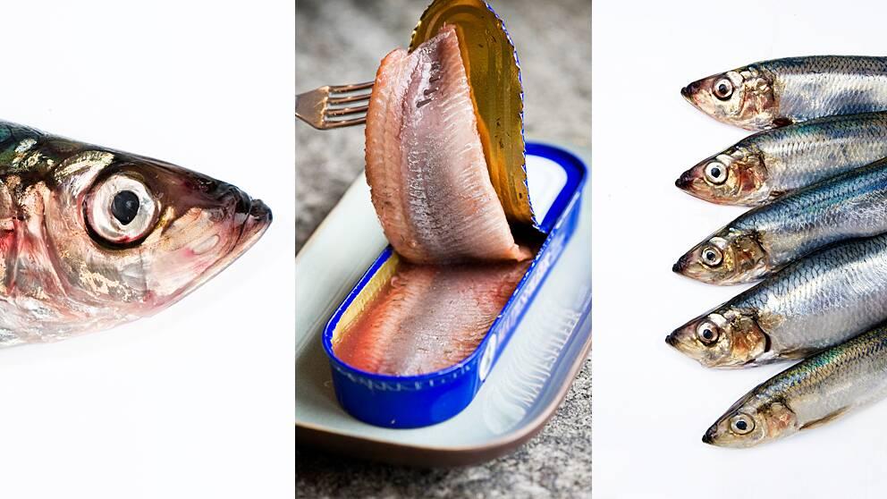 Fisk som fisk? Nej så klart inte – inte ens sill och strömming som är så lika är helt identiska, visar ny svensk forskning.