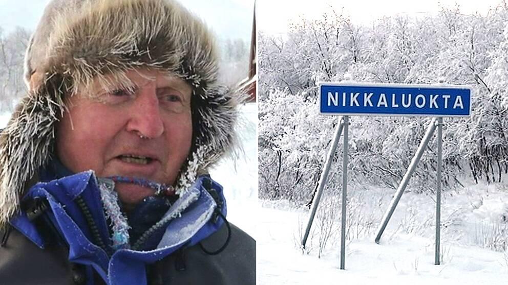 Reportern frös när SVT besökte Nikkaluokta förra året – men Olle Sarri har hö i vantarna.