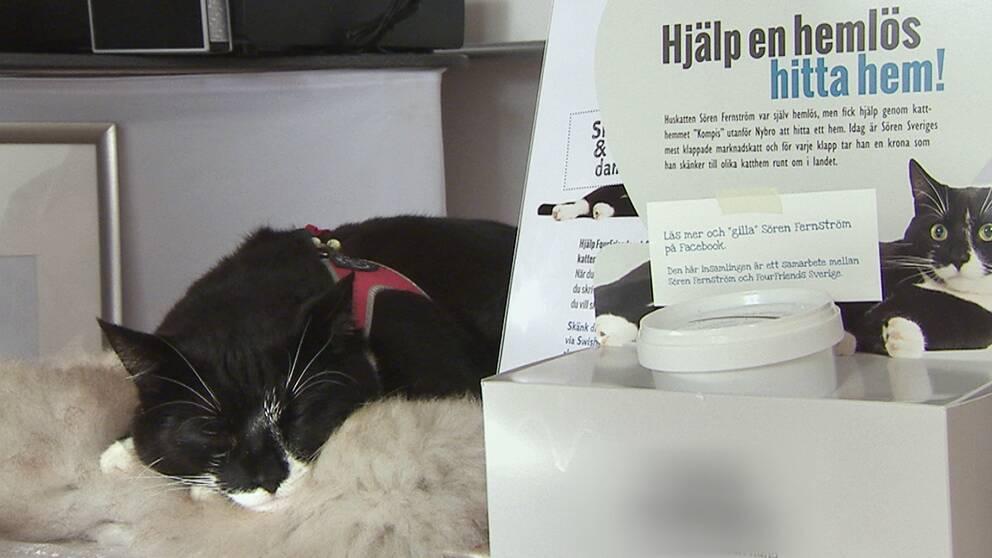 katten vilar på en fäll vid en insamlingsbössa