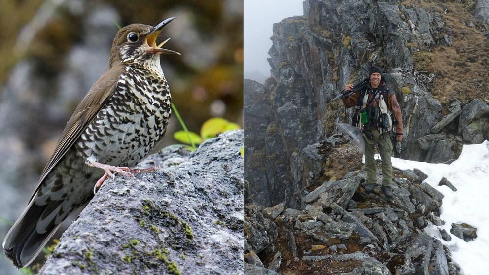 Himalayatrast är namnet på en helt ny fågelart som har upptäckts av forskningsgrupp ledd av uppsalaprofessorn Per Alström.