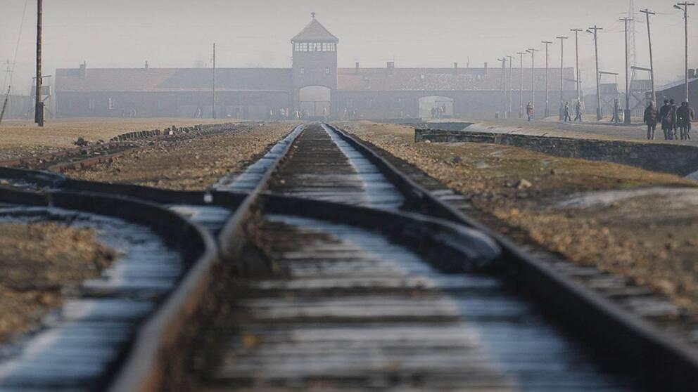 I dag är det 71 år sedan utrotningslägret Auschwitz-Birkenau befriades.