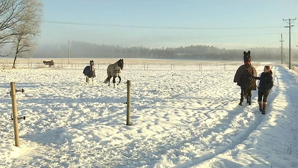 vinter hästar sadelstölder Rappestad Linköping