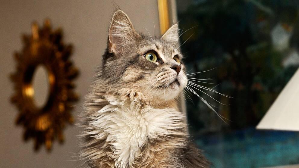 Forskare ska lära oss prata med katter