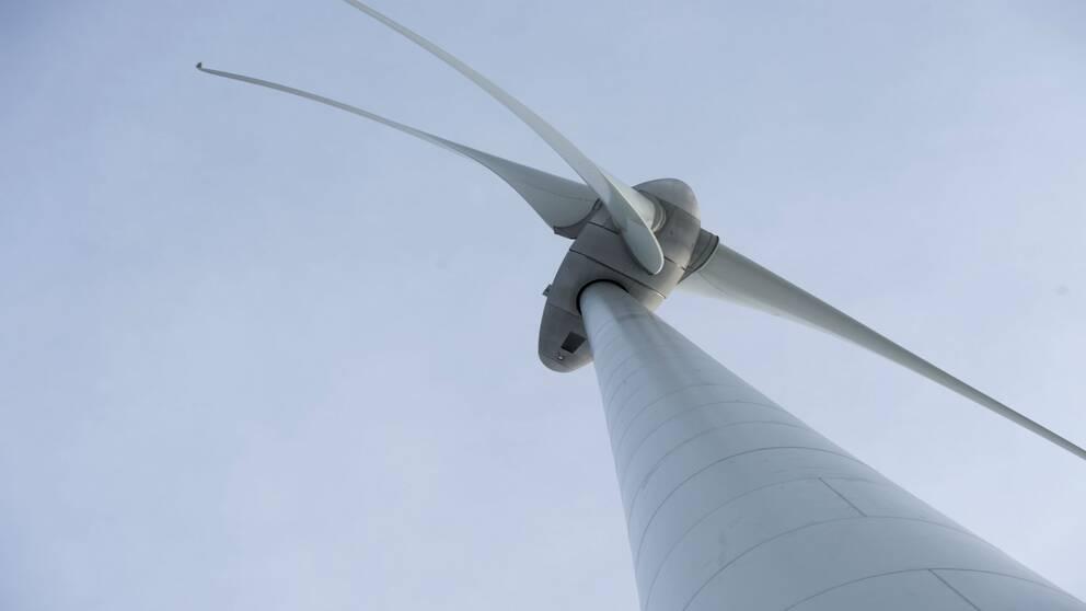Vindkraftspark planeras utanfö Falkenberg
