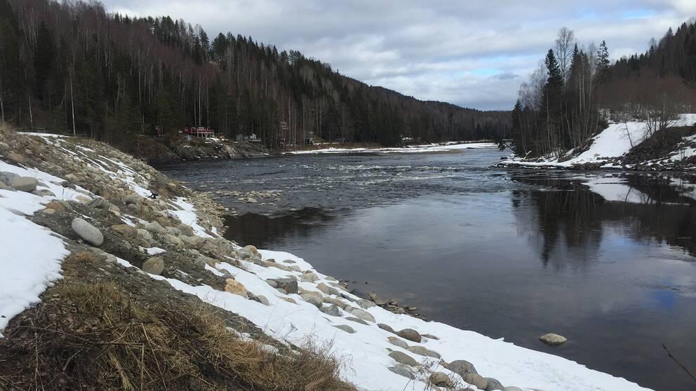 Allstaforsen i Ljungan nedströms Viforsens kraftverk.