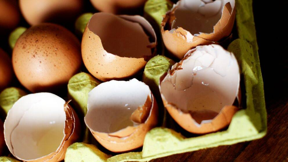 Äggskal av bruna ägg.