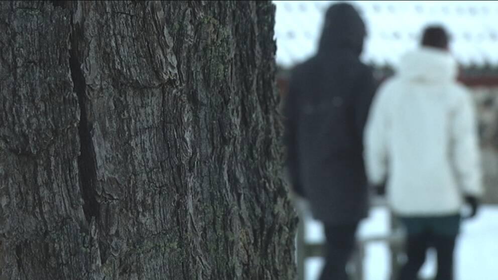 Träd i förgrunden. Personer suddiga i bakgrunden.