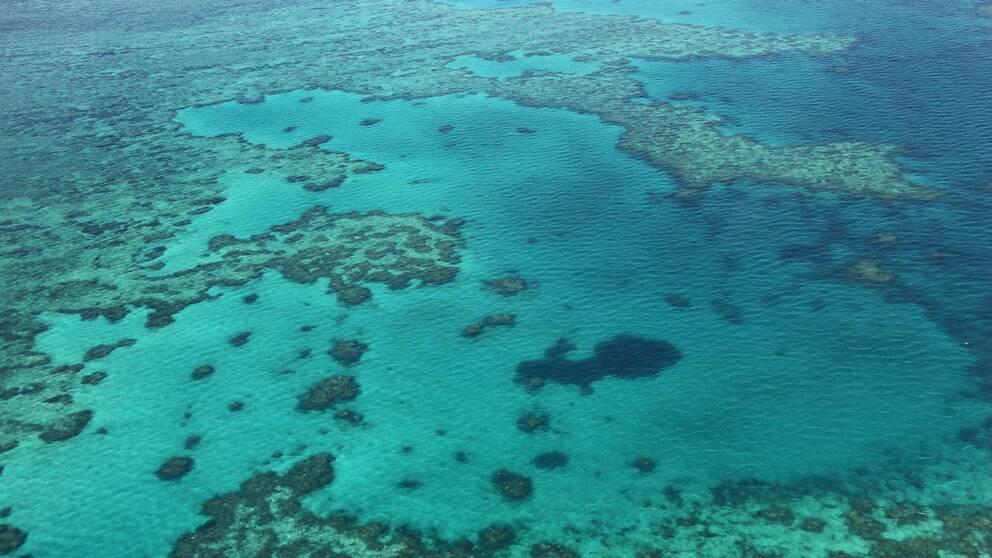 Barriärrevet vid Australiens kust.