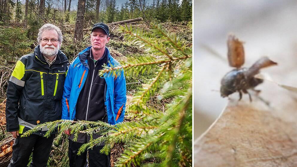 Gunnar Isacsson, Skogsstyrelsen och Staffan Andersson, produktionsledare Holmen.