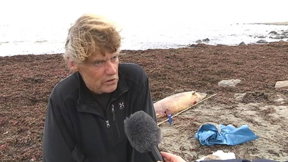 I dag var Svante Lysén från Naturhistoriska museet i Göteborg på plats för att ta prover på den delfin som flutit iland vid Morups Tånge utanför Falkenberg.