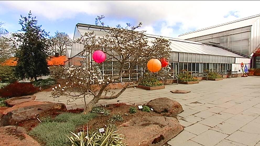 Botaniska trädgårdens växthus.