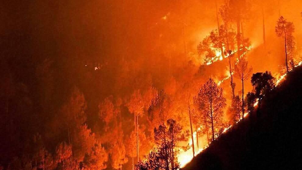 Skogsbrand i Indien.