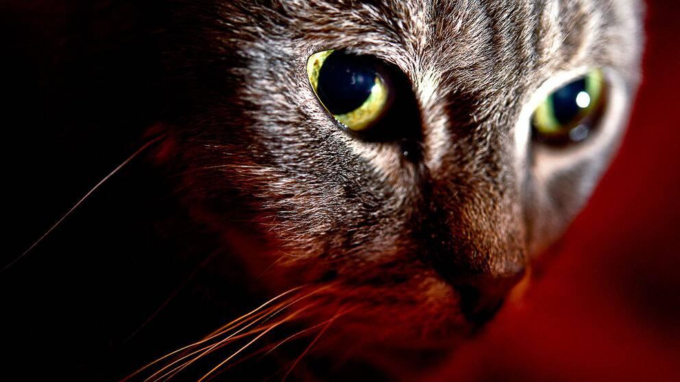 Närbild på en katt