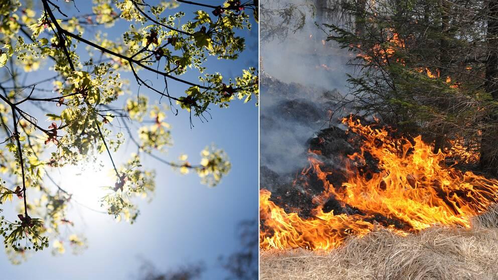 Stora delar av landet har redan meteorologisk sommar, men ytterligare åtta orter är på gång inom ett dygn. Samtidigt varnar nu SMHI för gräsbränder i Svealand.