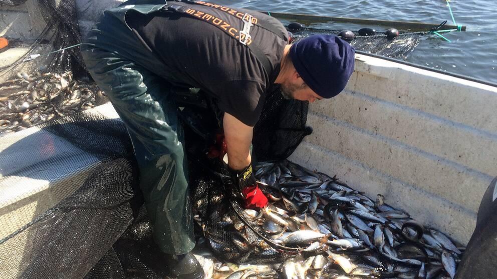 Fiske i Växjösjön.