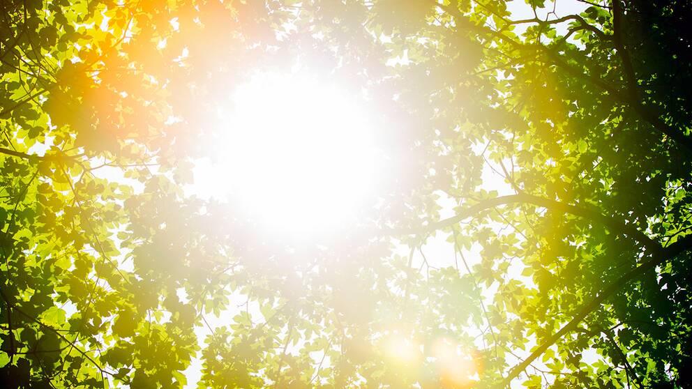solljus