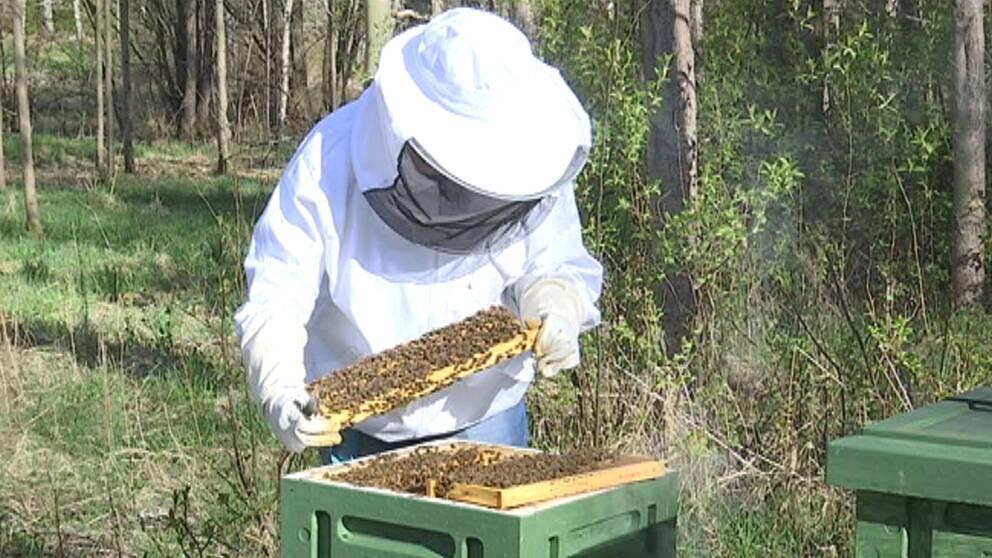 Kvinna undersöker bikupa