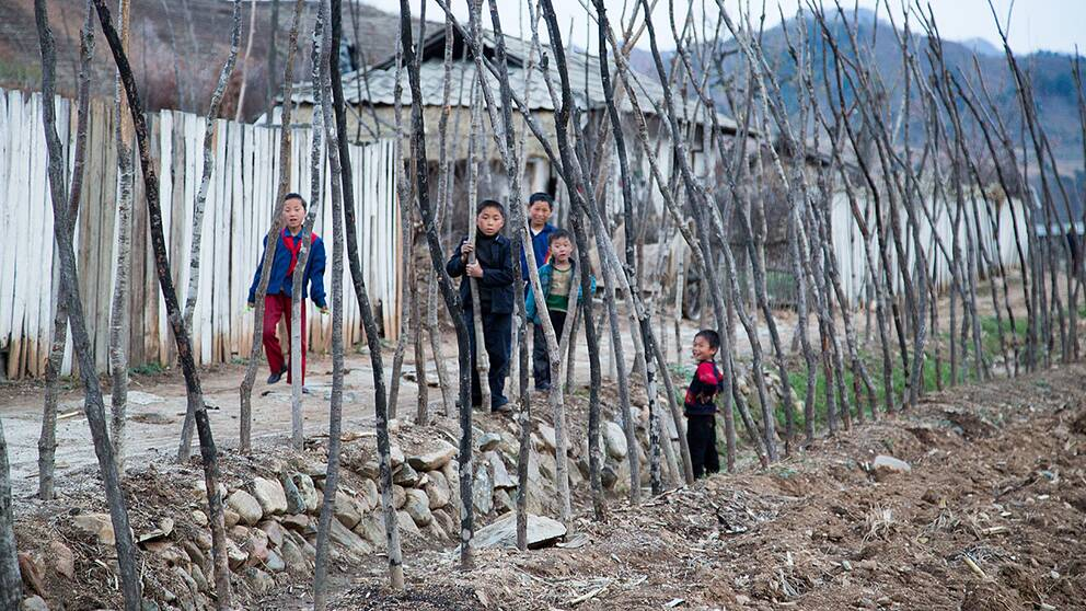 I den lilla byn Dongyang Ri hjälper Röda Korset till med att dra in vatten, odla svamp och växter.