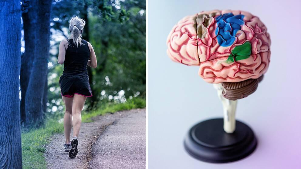 En bild på en löpare och en hjärna.
