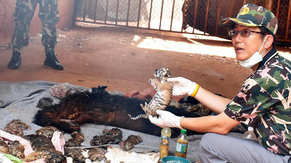 Munkarna anklagas för handel med vilda djur och för att olagligt ha fött upp tigrar i templet.
