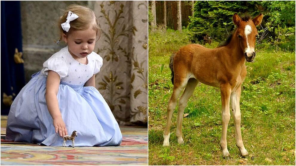 Prinsessan Leonore och hennes Gotlandsruss Haidi af Gotland.