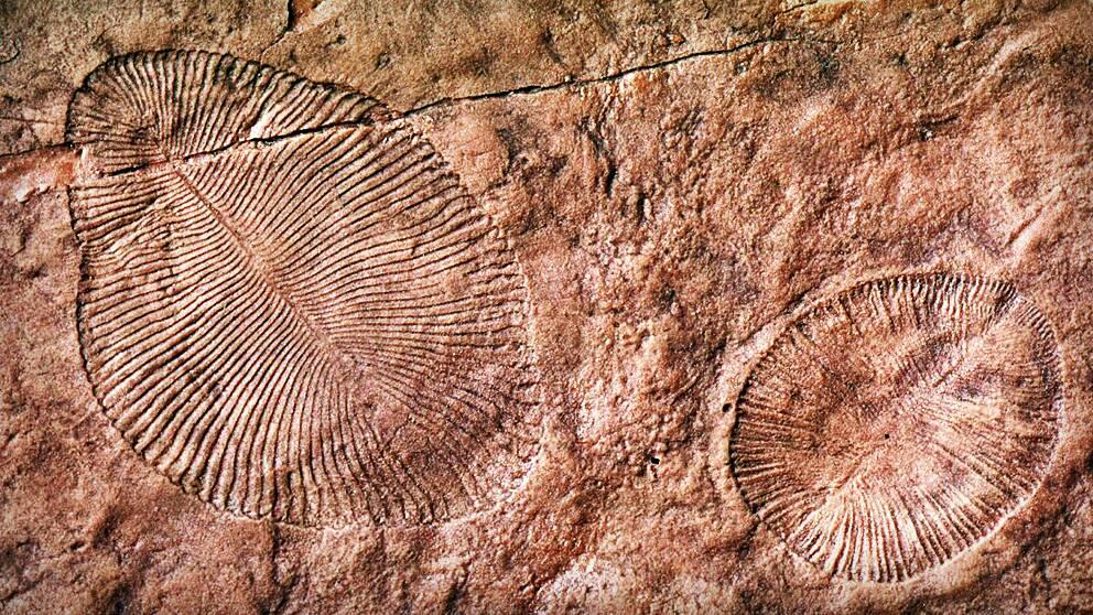 vetenskapen om fossila organismer