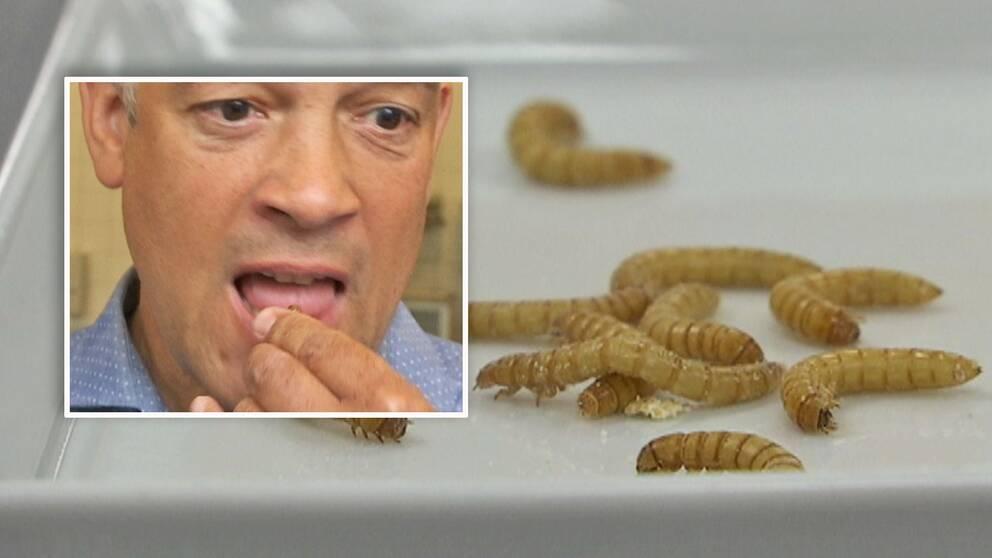 Se SVT Nyheters Ivan Loftrup Ericson provsmaka framtidens middag: insekter.