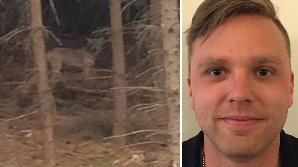 Sebastian Olofsson, vilthandläggare, till höger, och bild på förmodad varg, till vänster.