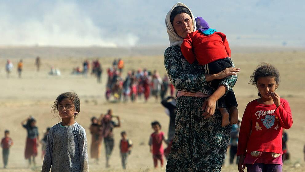 Yazidier på flykt från Sinjar-distriktet.