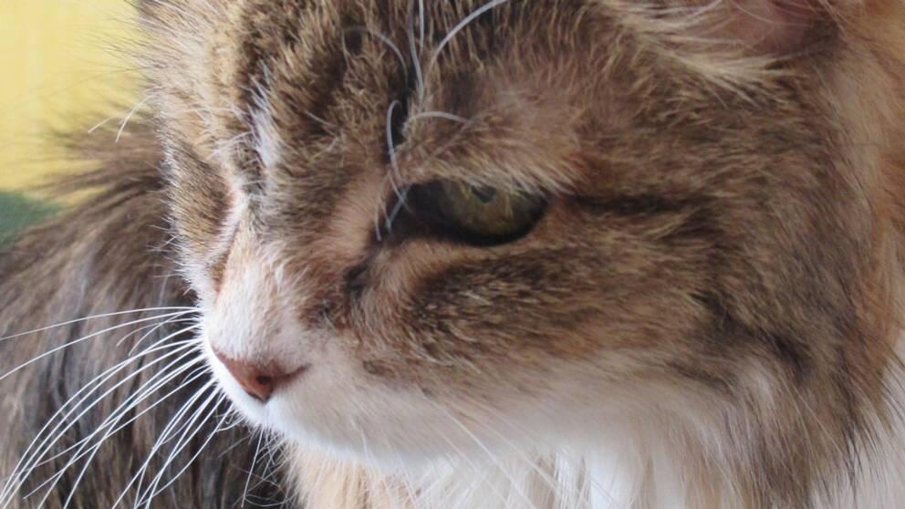 Enligt Susanne Hellman Holmström, kattexpert i SVT:s Go´kväll, är 29 år en extremt hög ålder.