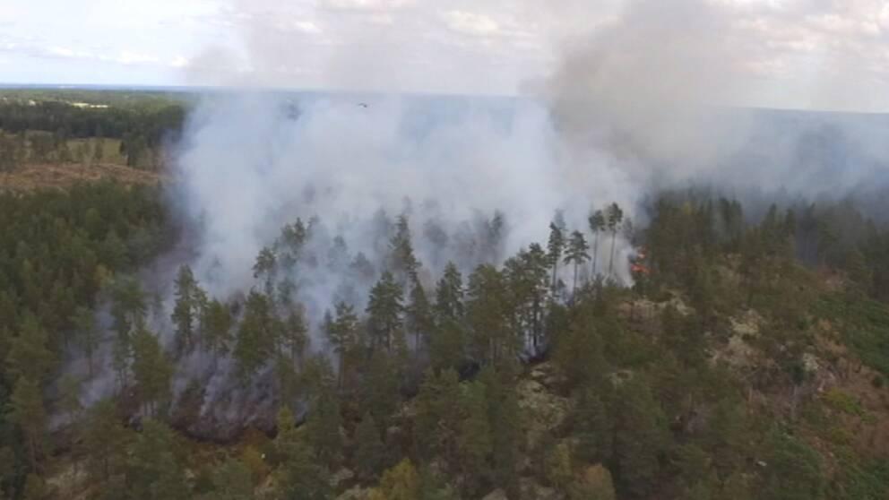 Skogsbrand nära Oxmossen utanför Söderköping i Östergötland den 27 juli. Branden orsakades troligen av ett blixtnedslag dagen innan.