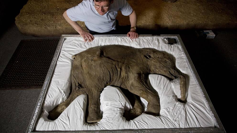 Mammutunge dodades av manniskor och lejon