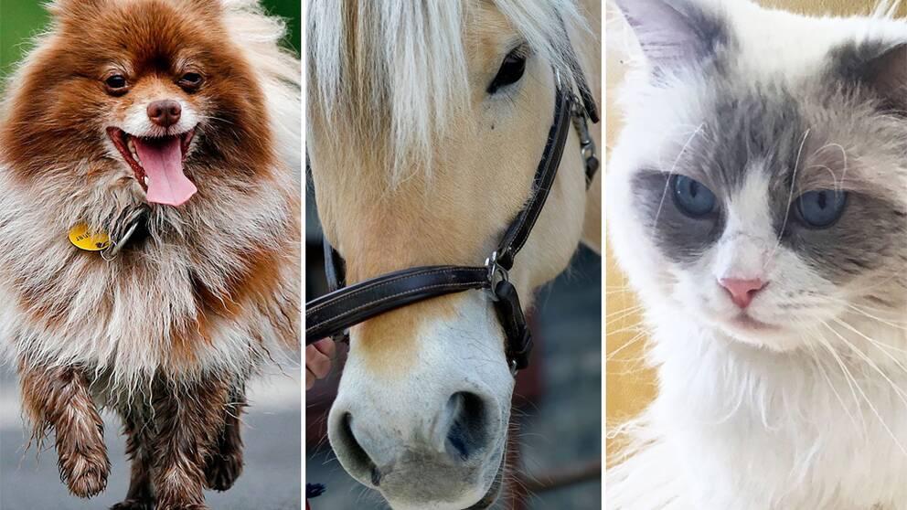 En hund, en häst och en katt.