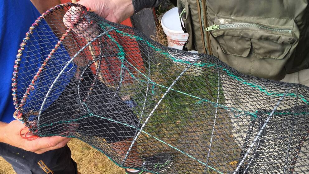 I samband med att kustbevakningen övervakade båttrafiken i Karlstad uppdagades ett misstänkt tjuvfiske av kräftor.
