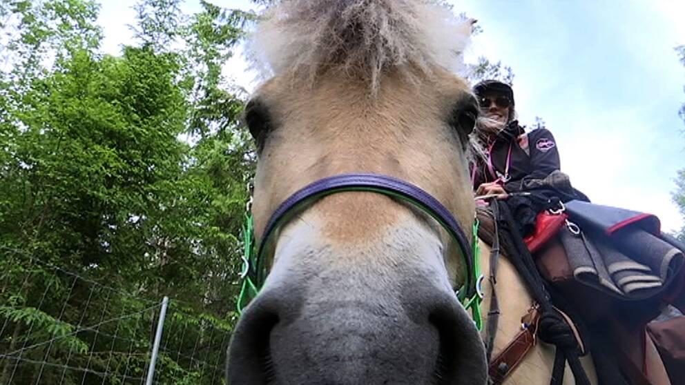 Hästen Krumelur och Suzanna Holmquist