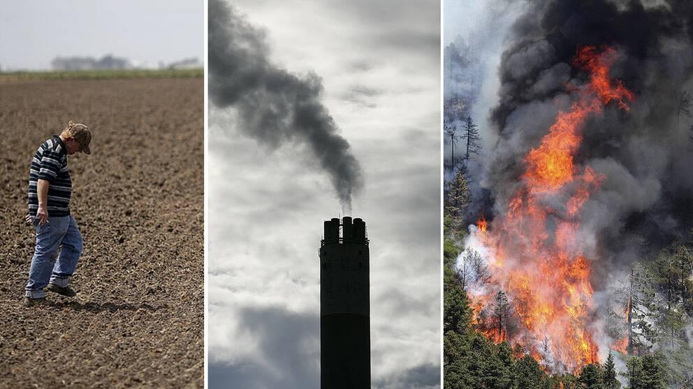 Bilder på torka, utsläpp och skogsbrand.