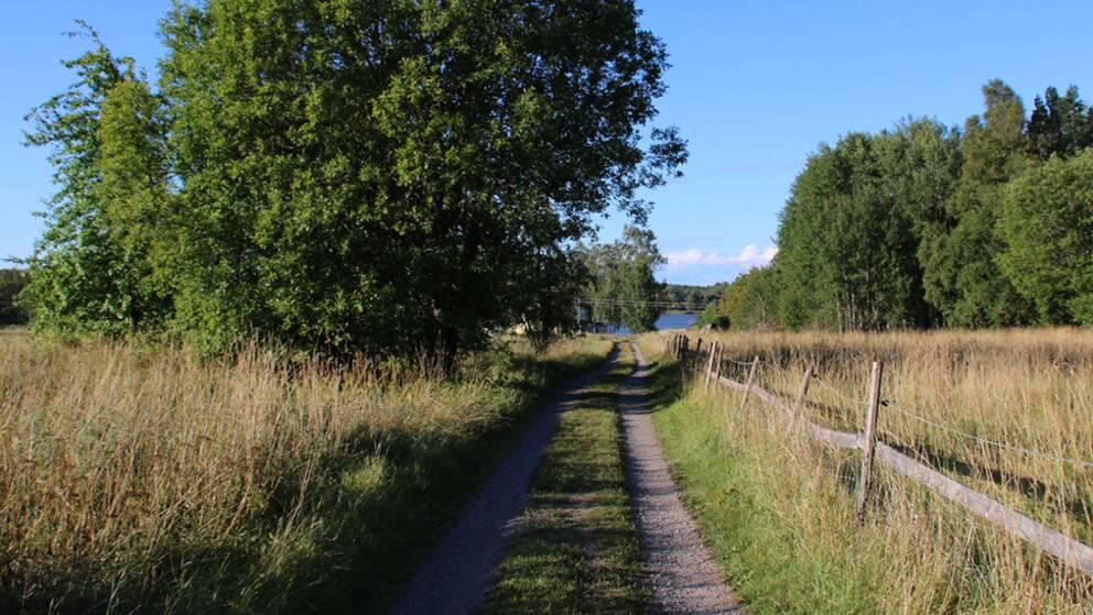 Idag skiner solen åter över Ramsjö gårds ägor i Morgongåva, Heby kommun. Men vist känns det att hösten är på ingång trots den mysiga grönskan försöker säga något annat. :-)