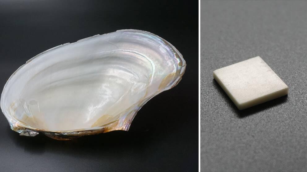 En tudelad bild med ett musselskal med skimrande pärlemor till vänster och den konstgjorda pärlemorn till höger.