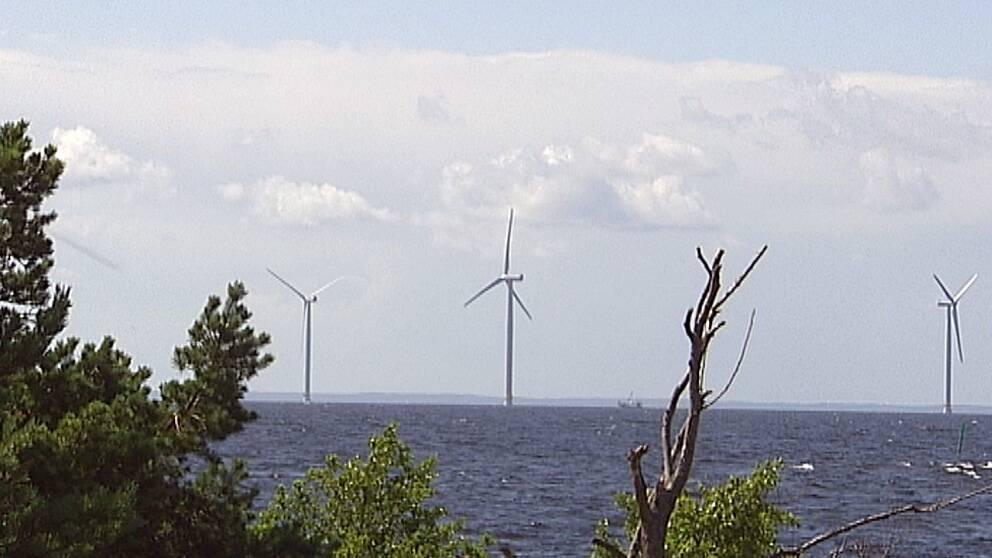 Flera vindkraftverk syns stå upp ute i vattnet.